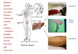 Liver and Its Functions