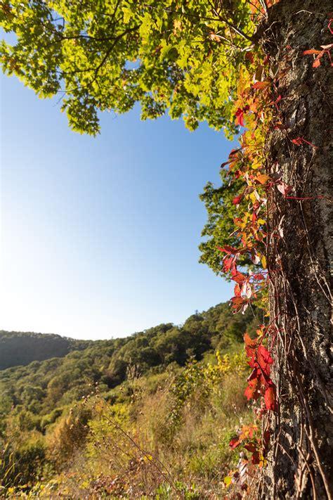 fall colors in virginia fall color in virginia 2018 color 2018