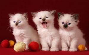 Hd, 3, Cute, Kittens, Wallpaper
