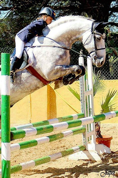 andalusian horse jumping yeguada cartuja horses hunter jumper