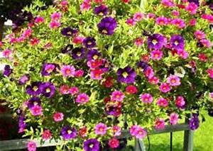 Blumenkästen Bepflanzen Ideen : sommerbepflanzung balkon balkonbepflanzung im sommer s dseite oder nordseite beispiele ideen ~ Eleganceandgraceweddings.com Haus und Dekorationen