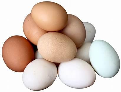 Egg Eggs Hen Transparent Fresh Farm Ovo