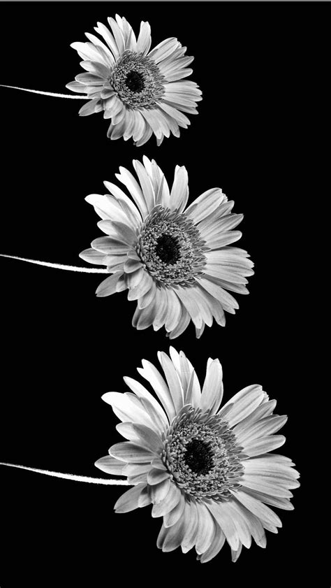 aesthetic black and white wallpapers
