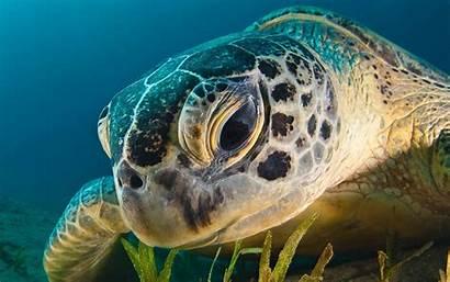 Sea Turtles Wallpapers Turtle