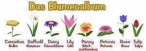 Blumenarten Az Mit Bild : blumen anpflanzen und die blumenarten forum for disney 39 s toontown online ~ Whattoseeinmadrid.com Haus und Dekorationen