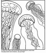 Aquarium Coloring Pages Bay Monterey Gellyfish Adults Printable Adult Jellyfish Sheets Cl Colouring Drawings 821px 79kb Jellies Template sketch template
