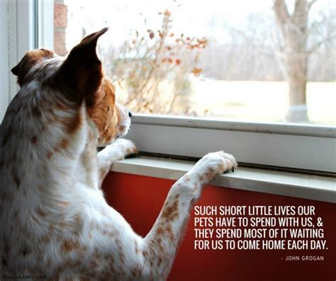 Short Inspirational Dog Quotes