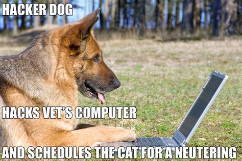 dog memes part   good  sad   funny