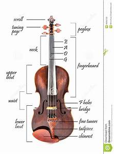 Parts Of A Violin Stock Photo  Image Of Classic  Tuner