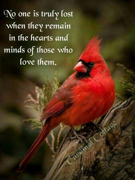cardinals   angels   images