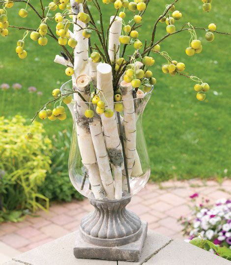 birch tree branch white gray rustic woodland natural