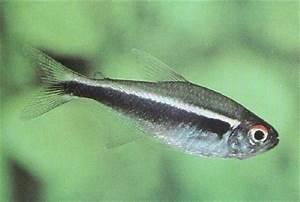 What fish should I
