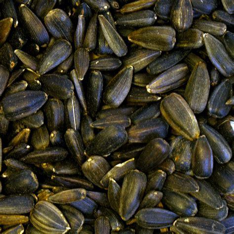 dr green wild bird food black sunflower seeds 13kg