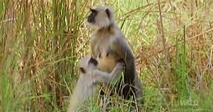 The Wild Hug : nat geo wild gifs find share on giphy ~ Eleganceandgraceweddings.com Haus und Dekorationen