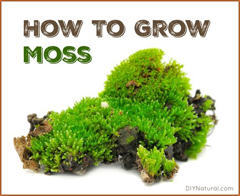 how to grow moss a simple and project
