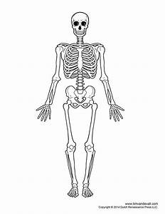 Skeletal System Outline Printable Human Skeleton Diagram