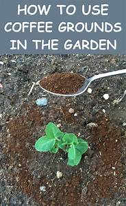 how to use coffee grounds in the garden gardentipz