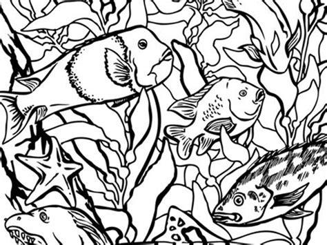 actividades familiares   monterey bay aquarium