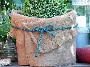 Winterschutz Für Kübelpflanzen : kokosfaser matte winterschutz f r garten und pflanzen natur 150 x 50 cm ~ Avissmed.com Haus und Dekorationen
