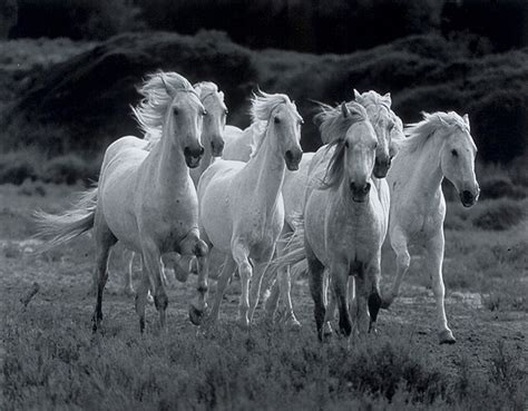 Wild Horses Wallpapers  Zone Wallpaper Backgrounds
