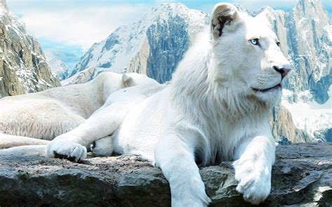 wild cat tiger lion wallpaper retina hd