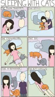 how to get a cat to like you sleeping with cats