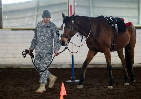 ptsd stricken soldiers  yelm  horses save lives