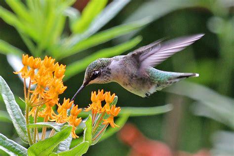 garden pollinators shortys garden center