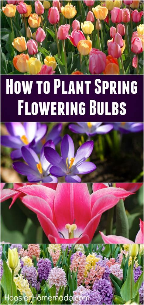 Tips Planting Fall Bulbs by 160 Best Best Garden Pins Images On Gardening