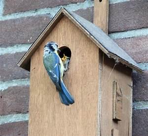 Casette per uccelli Vivaio Scariot