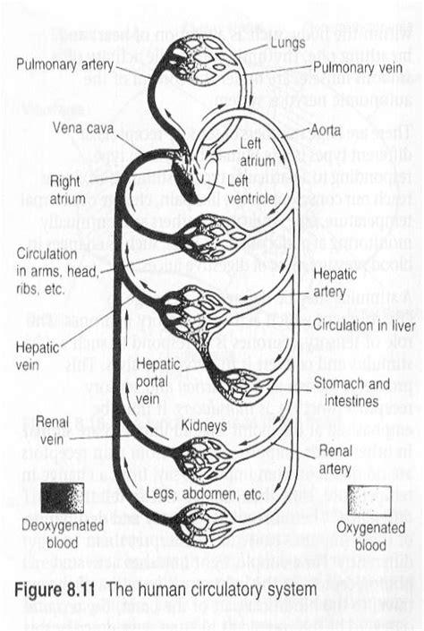 Circulatory System Diagram Worksheet  Human Circulatory System Worksheet Human Circulatory