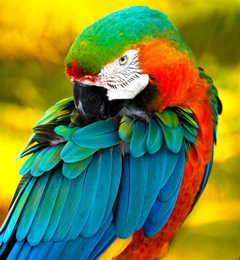 latest colorful birds wallpapers  itsmyideas great
