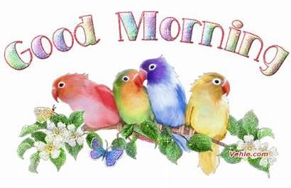 Morning Greetings Card Latest Animated Gifs Birds