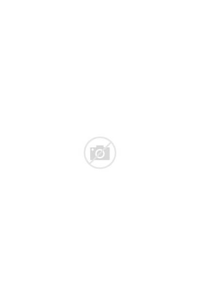 Plant Indoor Sansevieria Snake Plants Laurentii Transparent