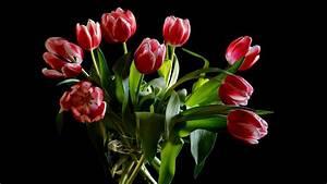 Tulpen In Vase : herunterladen 1920x1080 full hd hintergrundbilder tulpen blumen rot zweifarbige vase 1080p ~ Orissabook.com Haus und Dekorationen