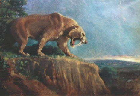 sabertooth cat the saber toothed cat ferrebeekeeper