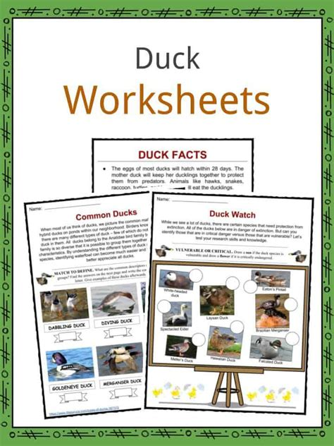 duck facts worksheets habitat species  kids