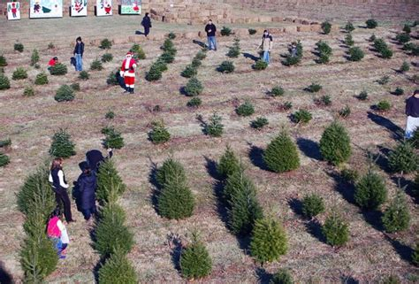 tree farms in south jersey cut your own tree farms near nyc poppins things to do in new york city with
