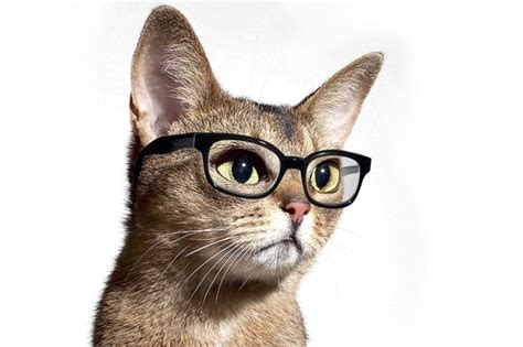 cat  glasses wallpaper wallpapersafari