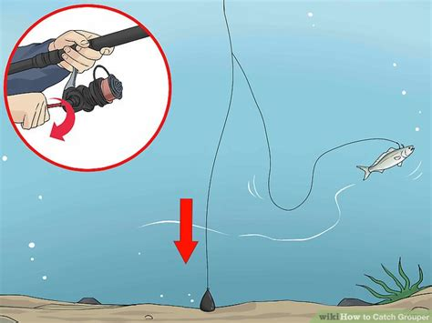 grouper catch bait hook wikihow