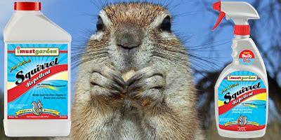squirrel deterrent for gardens squirrel repellent garden garden ftempo