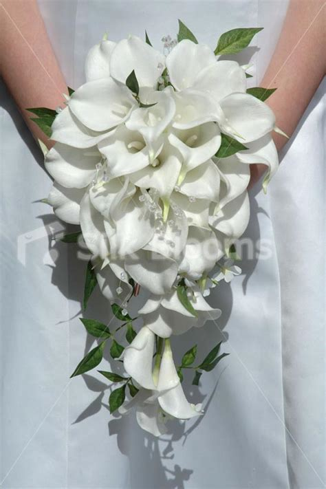 wedding bouquets calla lilies shop gorgeous white calla cascading bridal 8498