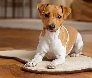 Hunde Größe Berechnen : hunde komfortmatte bei tchibo ~ Themetempest.com Abrechnung