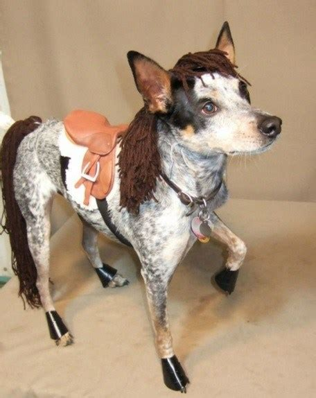 horses dogs horse equestrian dog looks