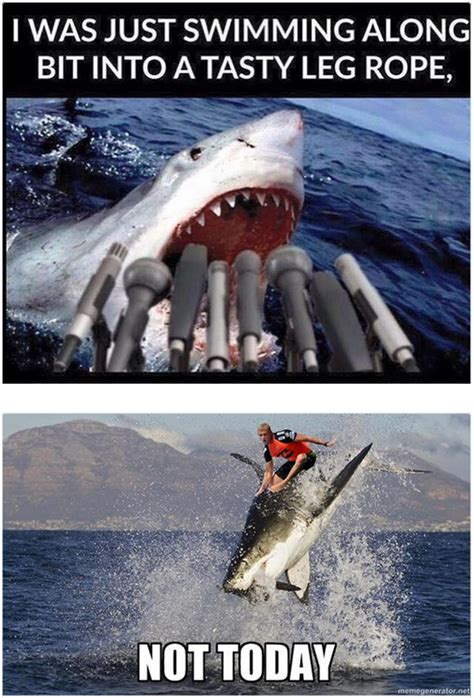 Shark Attack Meme - when hilarious mick fanning memes attack gq