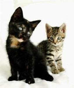 Vaccino Gatto il Gatto