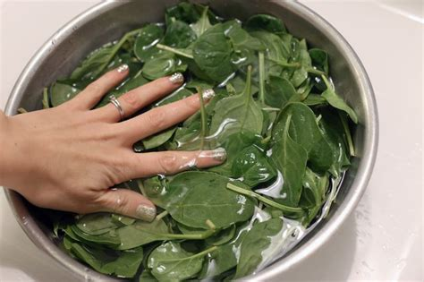 how to cook spinach how to cook fresh spinach the healthy way livestrong com