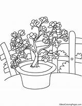 Magnolia Coloring Flowers Pages Bestcoloringpages sketch template