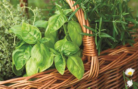 cultivez les fines herbes en pot habitation jardin et fleurs estrieplus le journal