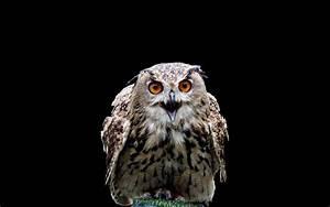 Birds Harry Potter owls black background wallpaper ...